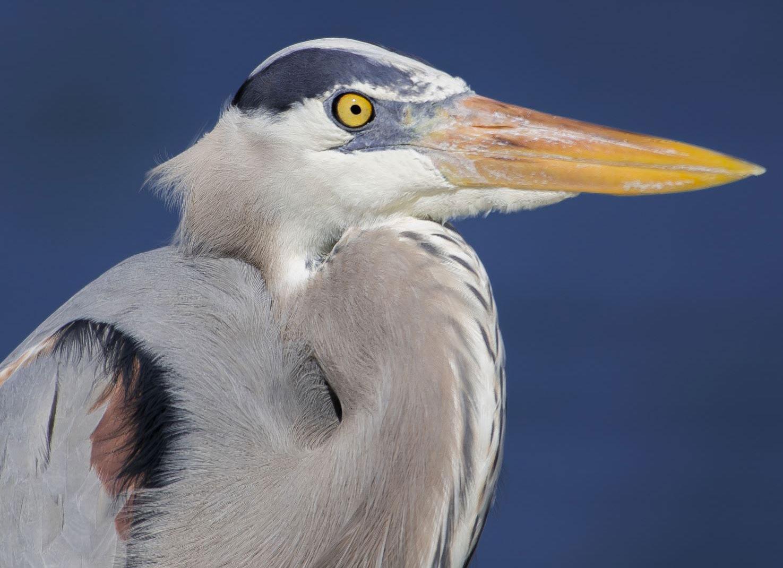 A Bird In Port Aransas